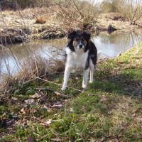 Babbs Mill dog walk, West Midlands - Dog walks in the West Midlands