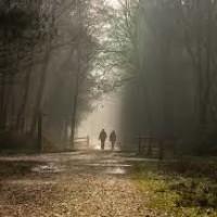 Pinewood studios dog walk, Buckinghamshire - black park.jpg