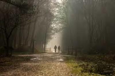 Pinewood studios dog walk, Buckinghamshire - Driving with Dogs