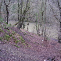 River Wear walk, County Durham - Dog walks in County Durham