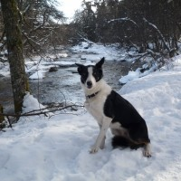 A95 dog walk in Nethy Bridge, Scotland - Dog walks in Scotland