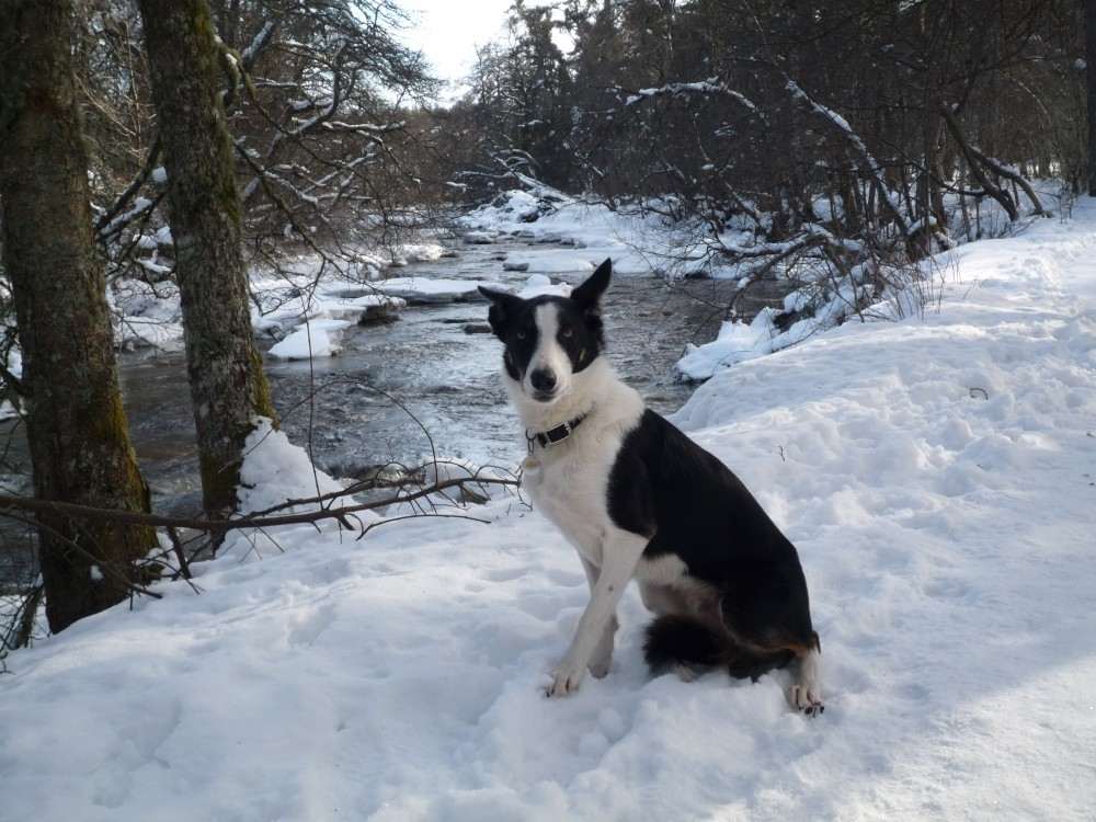 A95 dog walk in Nethy Bridge, Scotland - Dog walks in Scotland