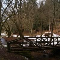 A90 dog walk in the Glen of Drumtochty, Scotland - Dog walks in Scotland