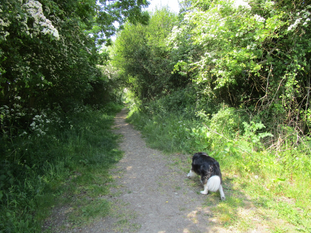 A361 dog-friendly pub and dog walk, Oxfordshire - Oxfordshire dog-friendly pub and dog walk