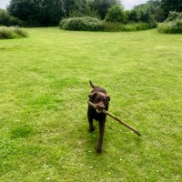 Easy access dog walk at MOTO services M4 eastbound, Berkshire