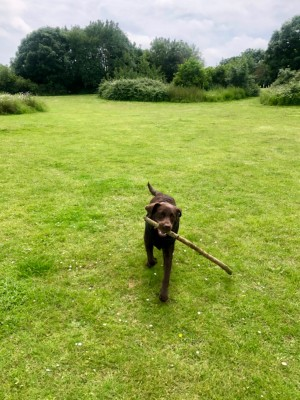 Easy access dog walk at MOTO services M4 eastbound, West Berkshire - Driving with Dogs