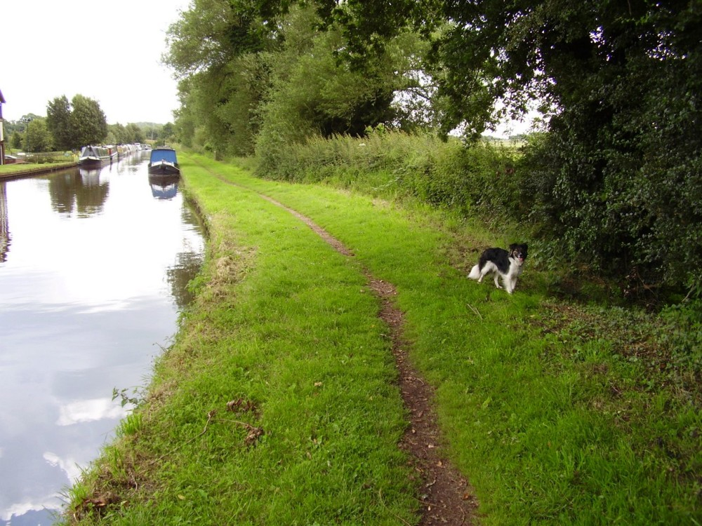 M6 Junction 13 dog walk with refreshments, Staffordshire - Dog walks in Staffordshire