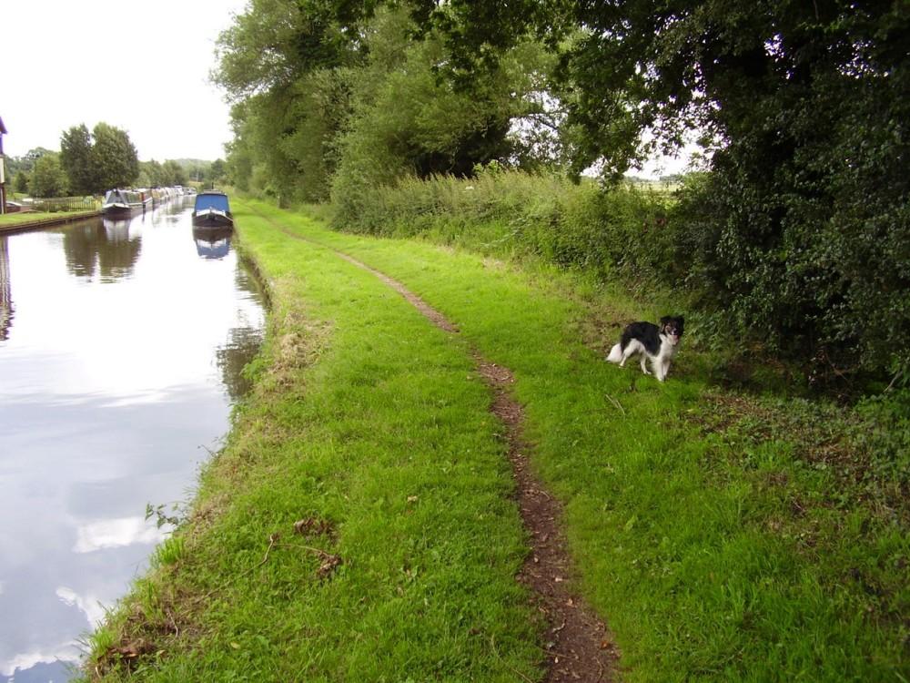M6 Junction 13 dog walk with refreshments, Staffordshire - Dog walks in Staffordshire