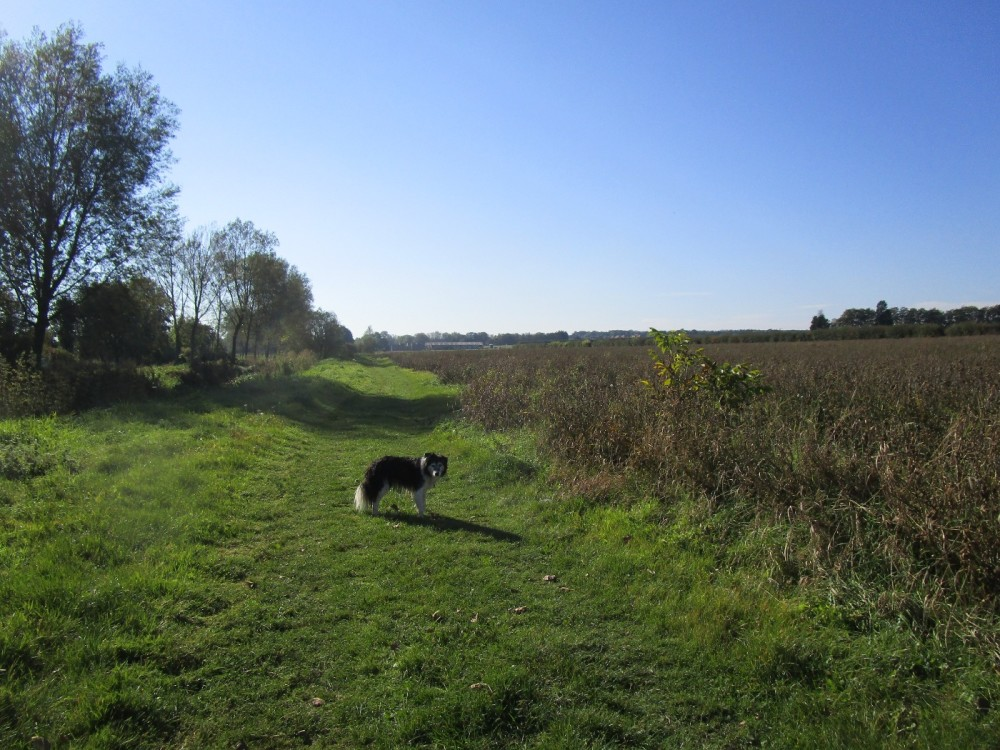 Gentle dog walk and a dog-friendly pub, Kent - Kent dog-friendly dog walk and dog-friendly pub