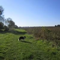 Gentle dog walk and a dog-friendly pub, Kent - Kent dog-friendly dog walk and dog-friendly pub