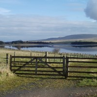 Reservoir dog walk near Balerno, Scotland - Dog walks in Scotland