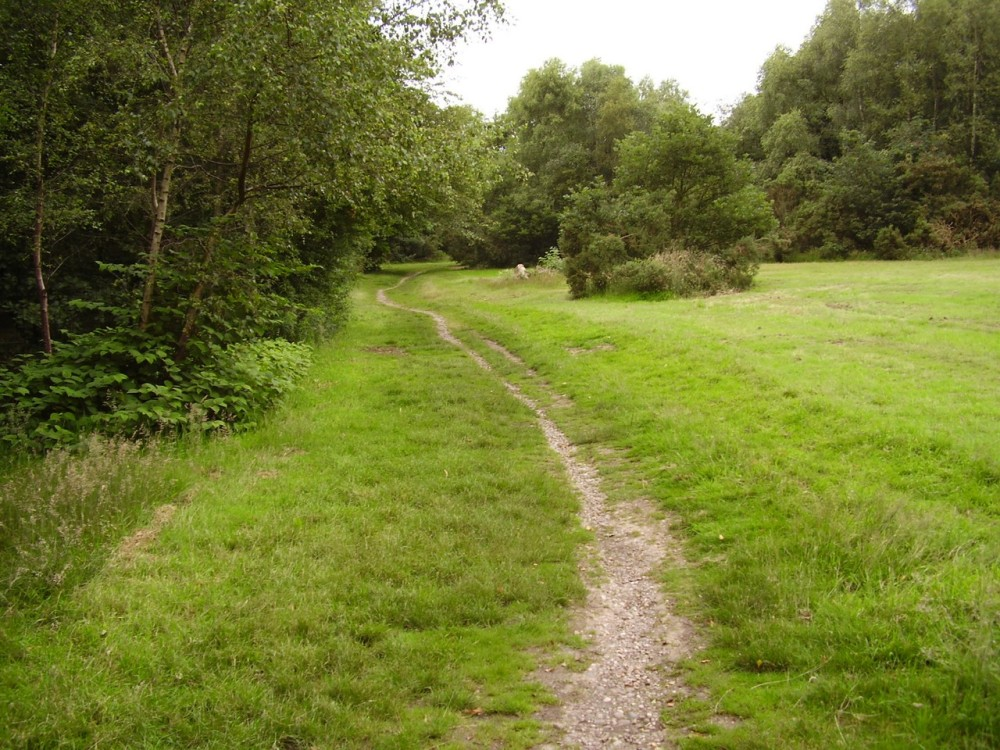 M6 Junction 15 woodland dog walk, Staffordshire - Dog walks in Staffordshire