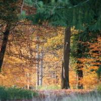 The King's Forest dog walks, Suffolk - Dog walks in Suffolk