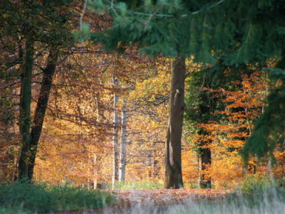 The King's Forest dog walks, Suffolk - Driving with Dogs