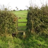 M6 Junction 16 dog walk and dog-friendly heritage pub, Staffordshire - Dog walks in Staffordshire