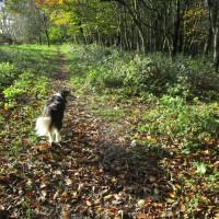 A352 dog walk in Wessex near Cerne Abbas, Dorset - IMG_6284.JPG