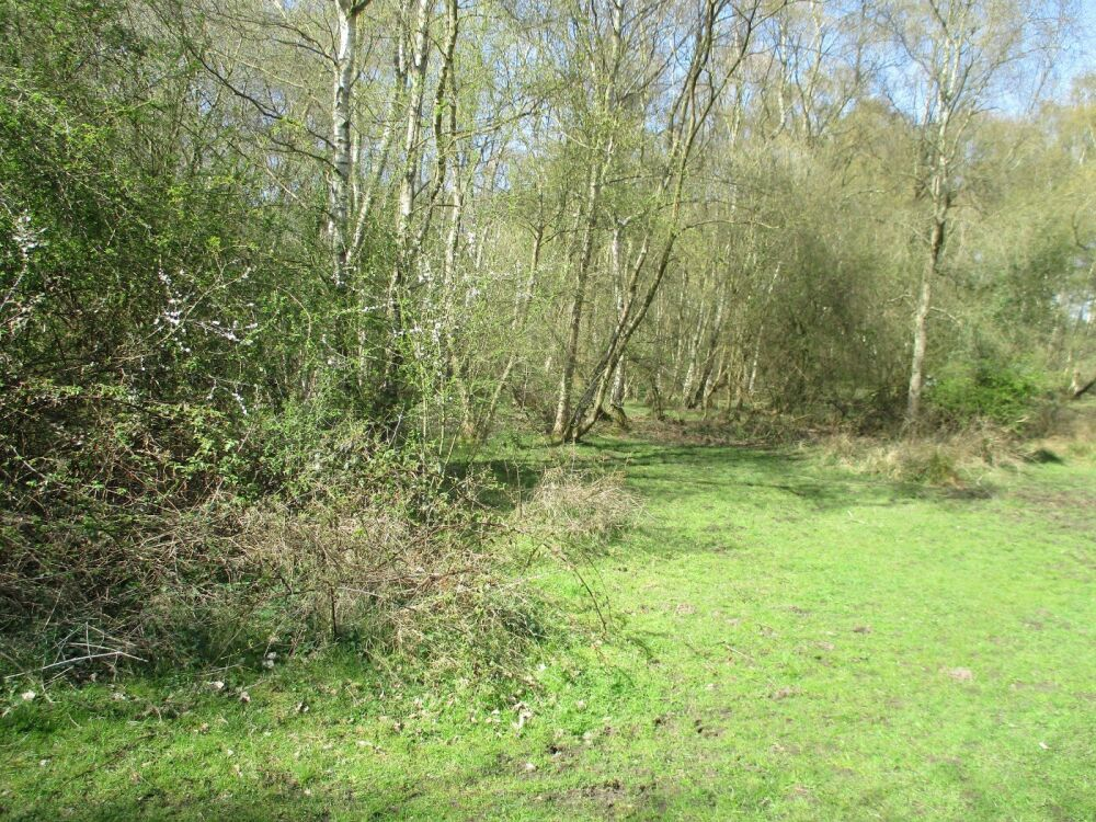 Marshy nature reserve dog walks, Norfolk - Norfolk nature ramble with the dog.JPG