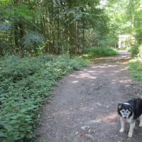 Scots Common dog-friendly pub and dog walk, Oxfordshire - Oxfordshire dog walk with dog-friendly pub