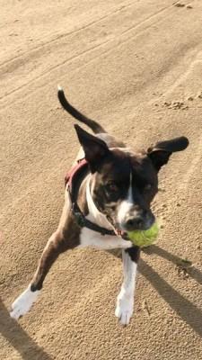 Dog-friendly beach near Georgeham, Devon - Driving with Dogs