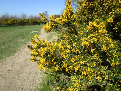 A3 dog walk near Grayshott, Hampshire - Driving with Dogs