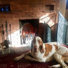 A1M dog-friendly pub with dog walk near Hatfield, Hertfordshire - Driving with Dogs