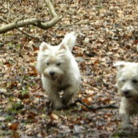 Motherwell dog walk, Scotland - Dog walks in Scotland