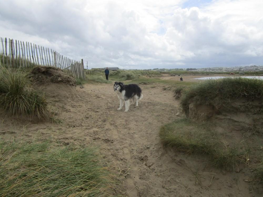 Seaside pub and big dog walk, Devon - Devon dog walk and dog-friendly pub.JPG