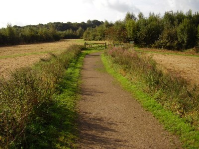 M6 Junction 20 dog walk near Lymm, Cheshire - Driving with Dogs