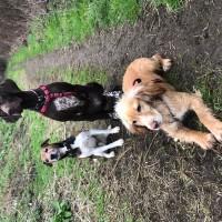 Jojones673 - Driving with Dogs