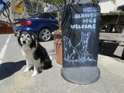 Coast path and dog-friendly pub on the beach, Wales - Driving with Dogs