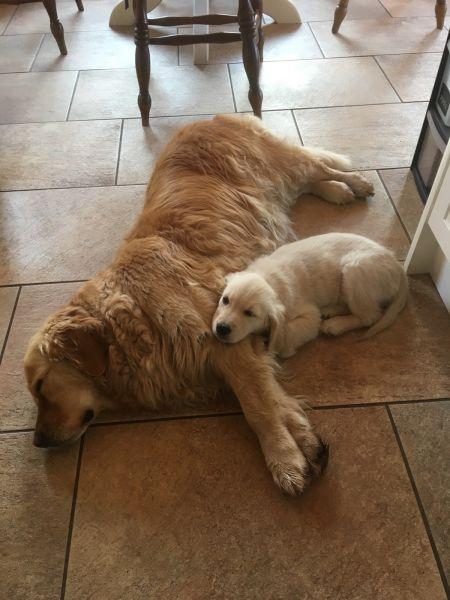 Pippa and Cilla cuddling up!