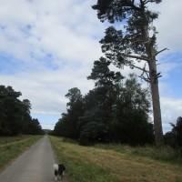 A438 dog-friendly inn and dog walk, Herefordshire - Herefordshire dog walk and dog-friendly pub.JPG