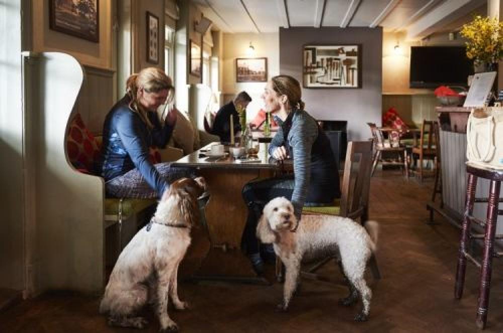 Limpsfield Chart dog-friendly pub and dog walk, Surrey - Surrey dog-friendly pub and dog walk