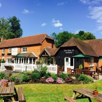 A327 dog walk and dog-friendly dining, Hampshire - Hampshire dog-friendly pub and dog walk