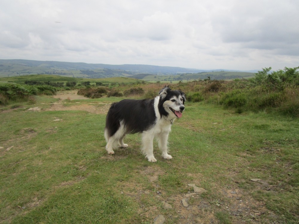 Exploring Shropshire with your dog