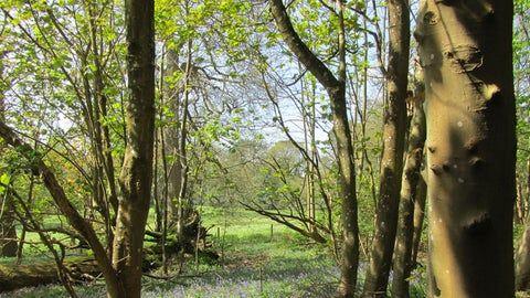 A25 dog walk near Dorking, Surrey - Surrey dog walk