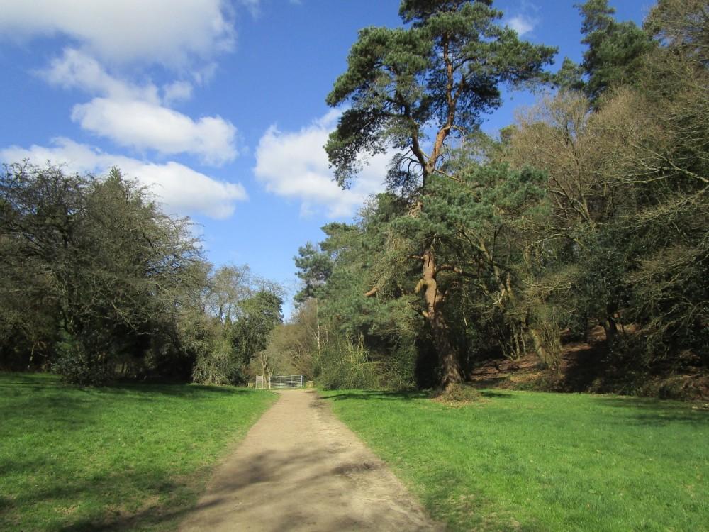 Peaslake dog walk in the forest, Surrey - Surrey dog walks.JPG