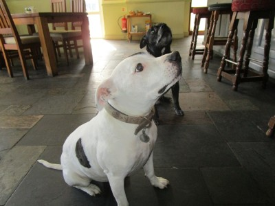 A248 dog-friendly pub near Guildford, Surrey - Driving with Dogs
