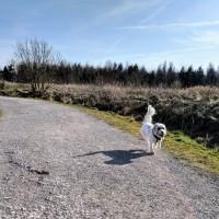 M62 J.7 Dog Walk at Sutton Manor Woodlands (The Dream Sculpture), Merseyside - IMG_20180224_141323.jpg