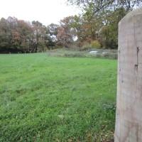 A351 short woodland dog walk, Dorset - IMG_6483.JPG