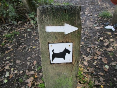 Blean Woods dog walk, Kent - Driving with Dogs
