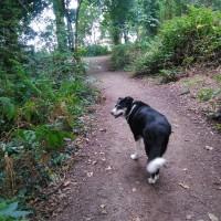 Ruff Wood dog walk, Lancashire - IMG_20170827_162125.jpg
