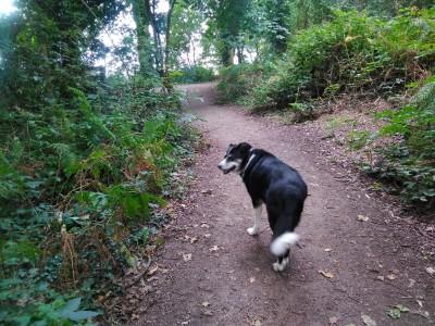 Ruff Wood dog walk, Lancashire - Driving with Dogs