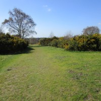 A3 dog walk near Grayshott, Hampshire - Hampshire dog walks.JPG
