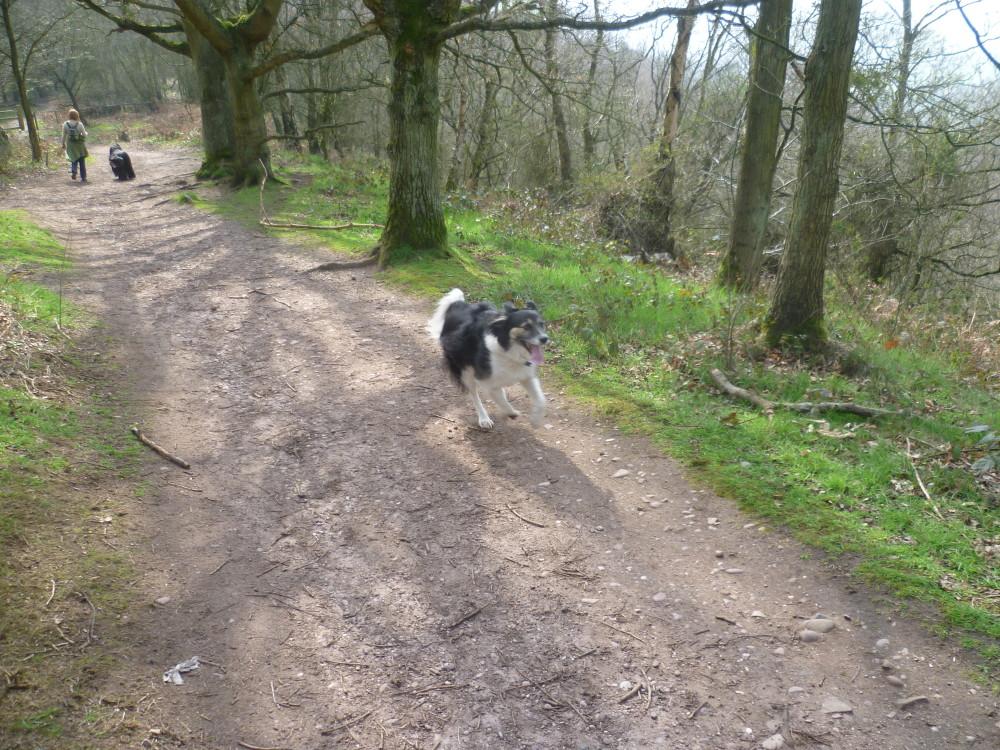 Kingsford Forest dog walk, Worcestershire - Dog walks in Worcestershire