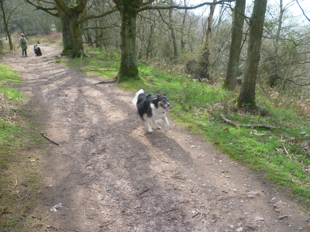 Kingsford Forest dog walk, Worcestershire - Dog walks in Worcestershire