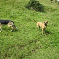 Hulme End dog-friendly pub, B&B and dog walk, Staffordshire - Peak District dog-friendly pub and dog walk
