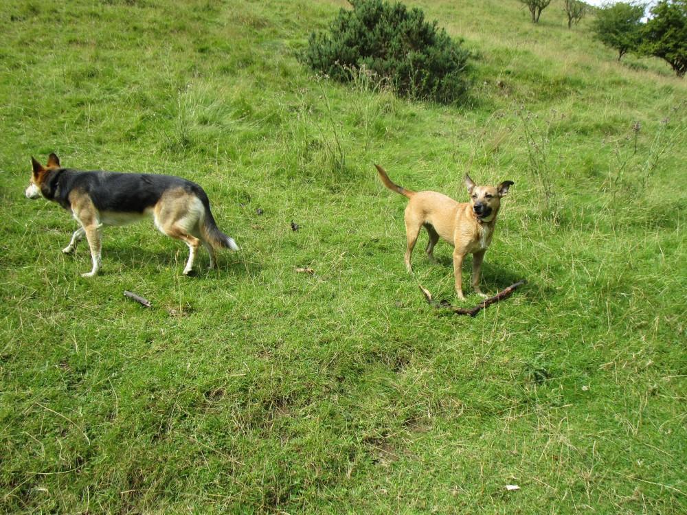 Hulme End dog-friendly pub and dog walk, Staffordshire - Peak District dog-friendly pub and dog walk