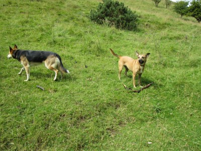 Hulme End dog-friendly pub and dog walk, Staffordshire - Driving with Dogs