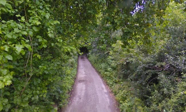 A54 Easy linear dog walk, Cheshire - dog walks in cheshire.jpg